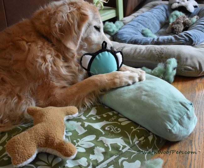 Indoor Activities - Positive Pet Training