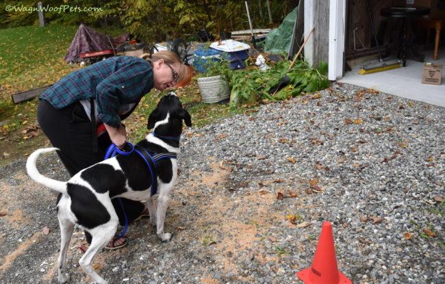 Positive Pet Training - November
