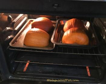 Fresh Pumpkin!
