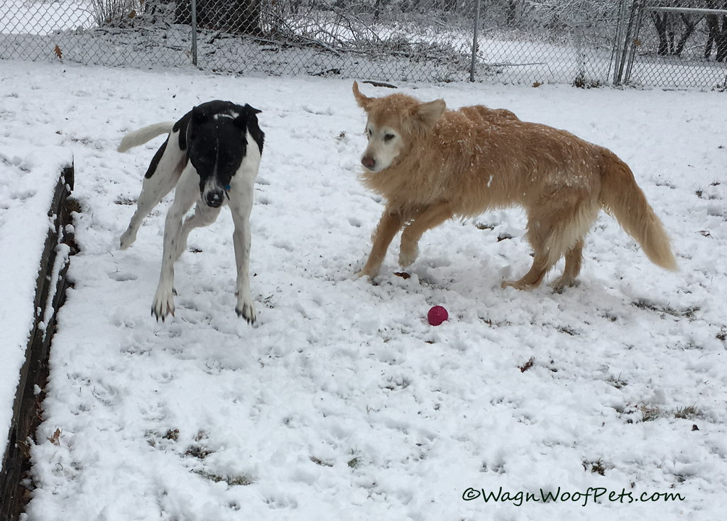 Romping in the First Snow of the Season!