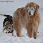 Managing Our Dogs' Osteoarthritis