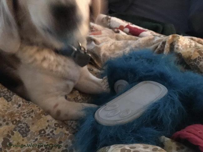 #PetBloggerBloopers - Beagle Blur