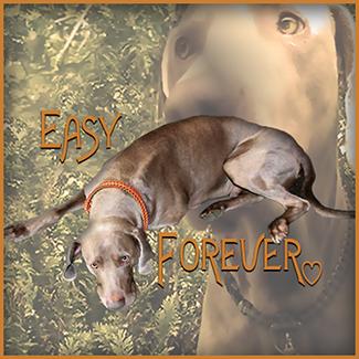 easy-forever-2