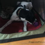 Making a Crate a Safe Space for an Adult Dog – A Mutual Gift Through Positive Pet Training