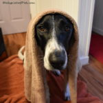 Fresh 'n Fluffy, Soft 'n Shiny…..with Isle of Dogs