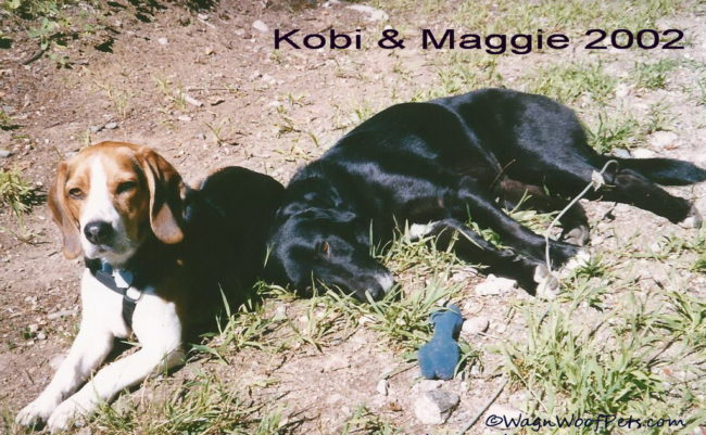 What's in a Dog's Name? Kobi & Maggie