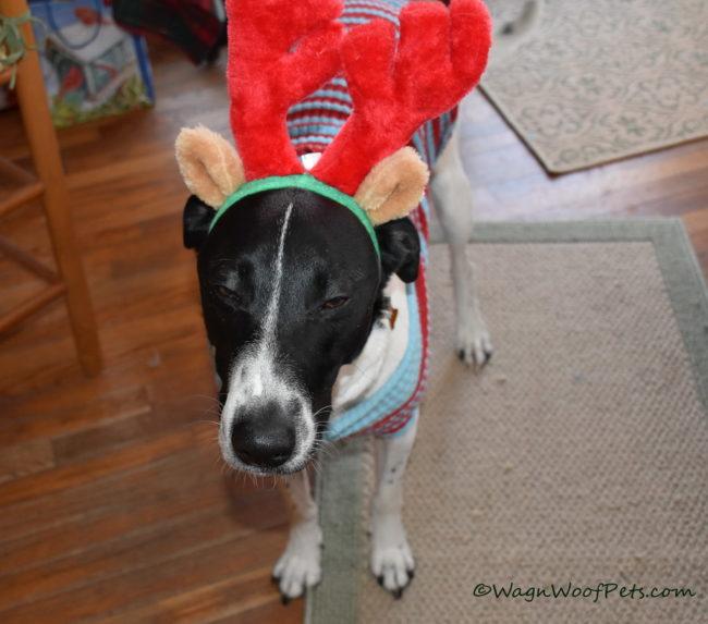 December Pet Treater Box