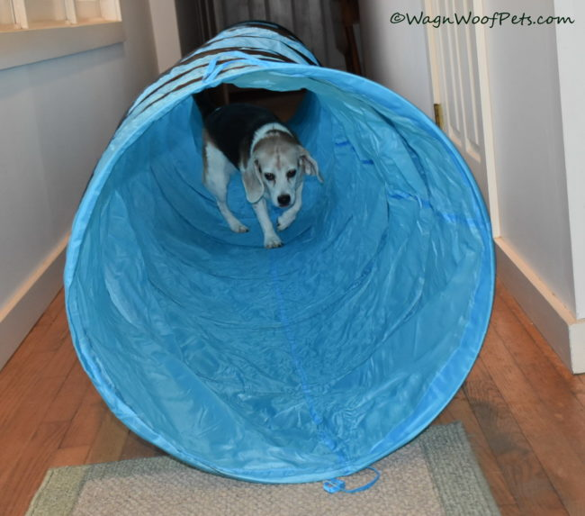 Cricket Checks Out the New Tunnel