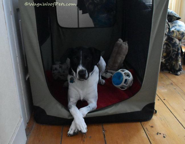 Positive Pet Training Inspiration