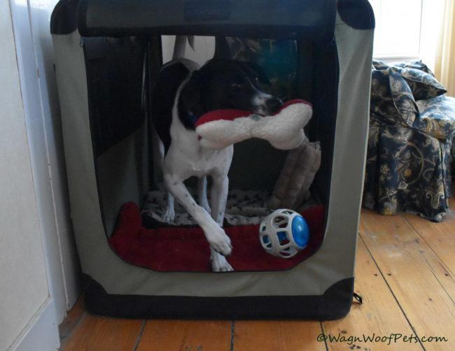 Positive Pet Training - Inspiration