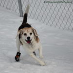 In Search of All Weather Durable Dog Boots