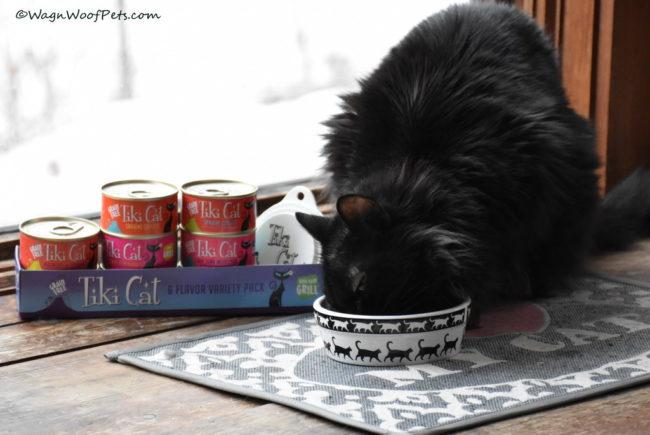 Samantha Tries Tiki Cat
