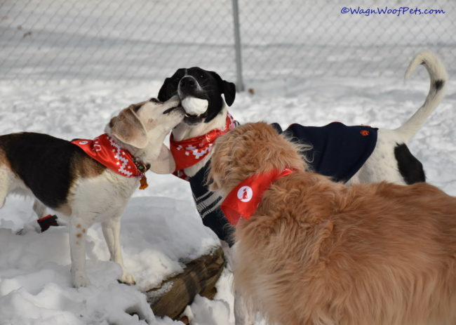 Tru Dog Review & Giveaway