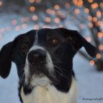 #PetPhotographyChallenge – Week 5 – Bokeh