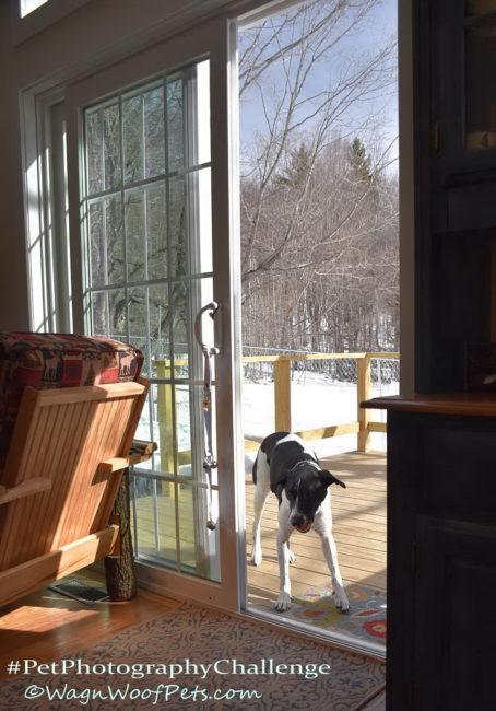 #PetPhotographyChallenge - Doorways
