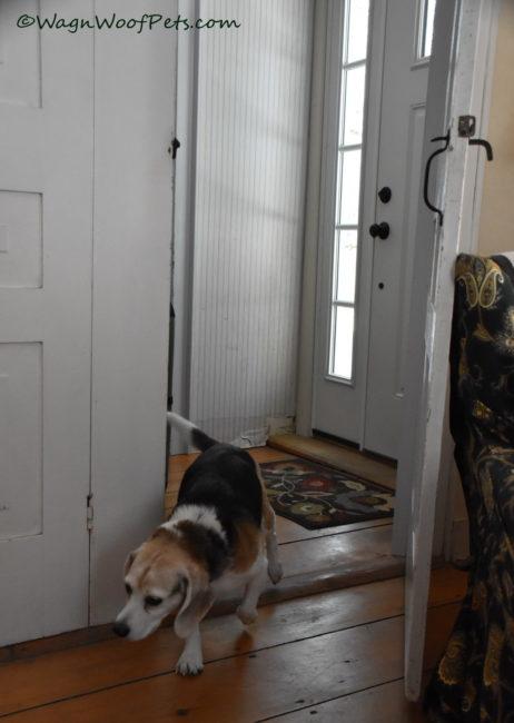 Doorways - this week's #PetPhotographyChallenge