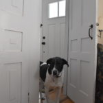 """Doorways"" #PetPhotographyChallenge"