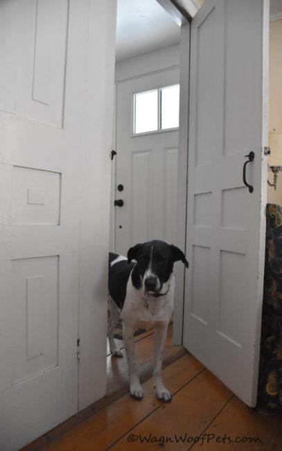 """""""Doorways"""" #PetPhotographyChallenge"""