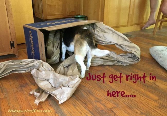 Vanishing Beagle