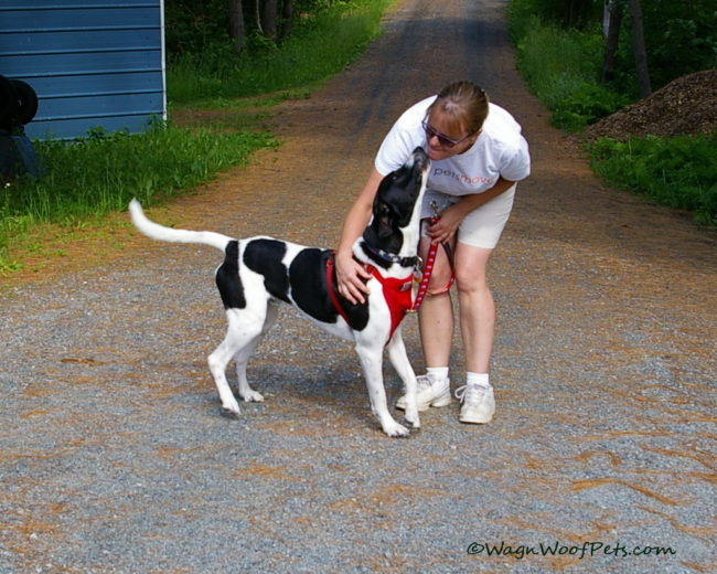 Our Top 10 Favorite Positive Pet Training Tools
