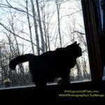 """Silhouette"" #PetPhotographyChallenge"