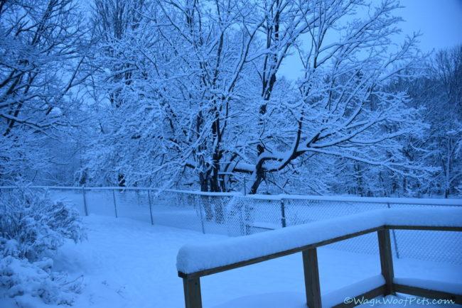 Snowmaggedon!