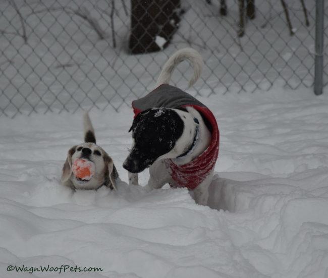 Winter Weather Alert - Snowmageddon!