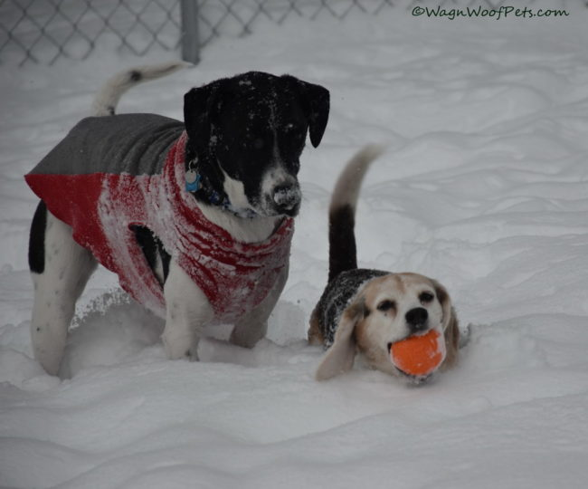 Snowmageddon! Winter Weather Alert