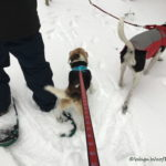 Winter Fun on Snowshoes!