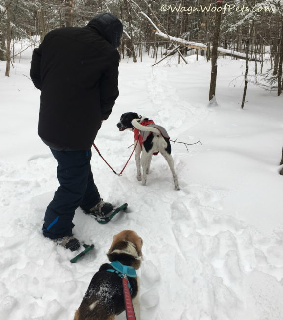 Winter Snowshoe Fun