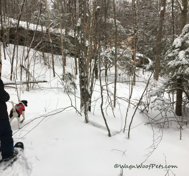 Winter Snowshoe Fun!