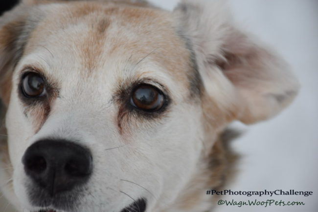 """Window to the Soul"" - #PetPhotographyChallenge"
