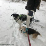 Last Snowshoe – All Eyes on the Momz!