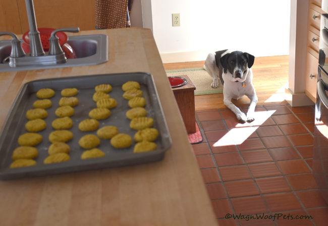 Easy Pumpkin Dog Cookies for the K9 Crew