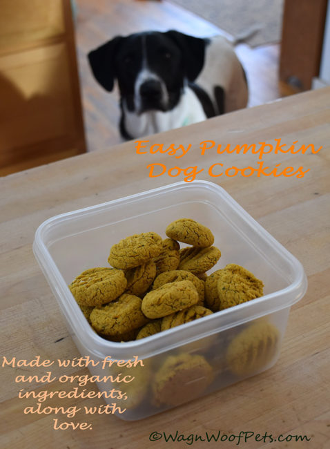 Baking for the K9 Crew - Easy Pumpkin Dog Cookies