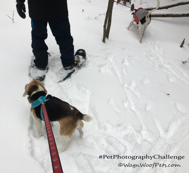 """The Other End of the Leash"" #PetPhotographyChallenge"