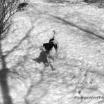 Simply Black & White #PetPhotographyChallenge