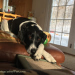 Creative Process: How Writing and Photography Complement Each Other on a Pet Blog