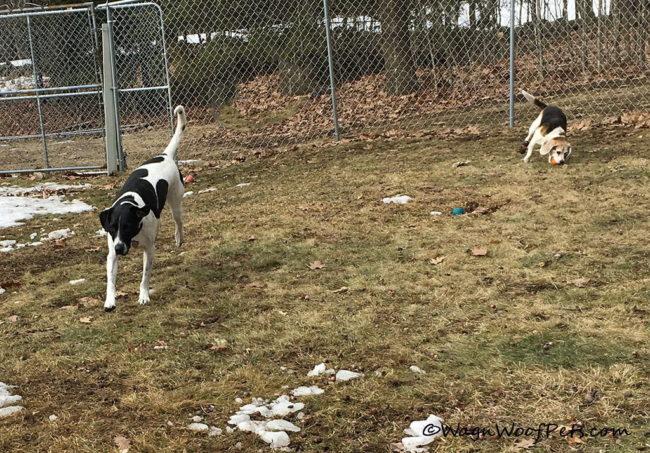 March Positive Pet Training Blog Hop