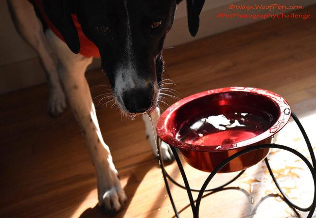 """Thirsty?"" #PetPhotographyChallenge"