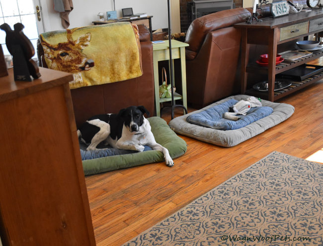Positive Pet Training - Learning to Calm Down