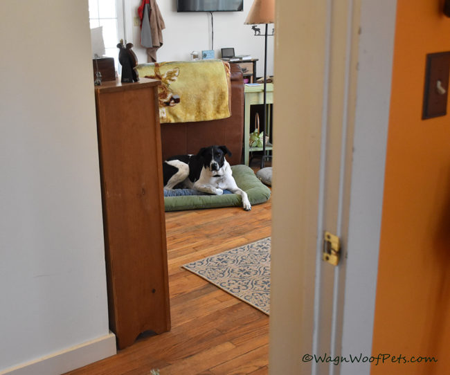 Learning to Calm Down - Positive Pet Training