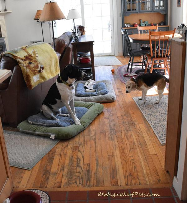 Positive Pet Training - Calming & Impulse Control