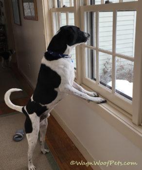 Calming Through Positive Pet Training