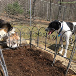 Yard & Garden Work with Dogs – The Helpers