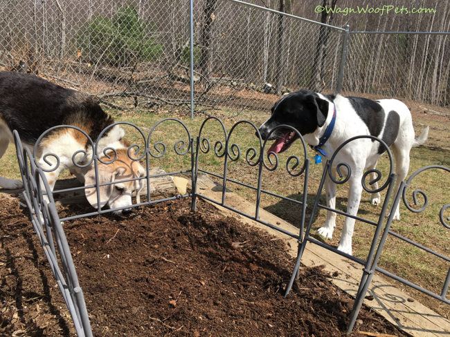 Yard & Garden Work with Dogs - The Helpers