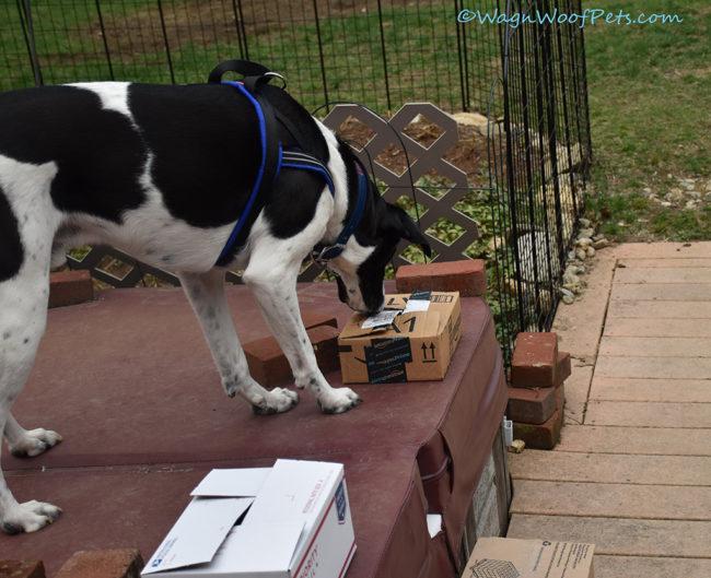 Building Confidence for a Reactive Dog Through Nose Works