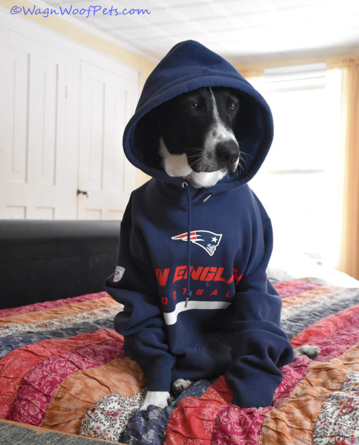Our New England Dog