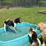 Throwback Thursday – When Will the Pool Open?