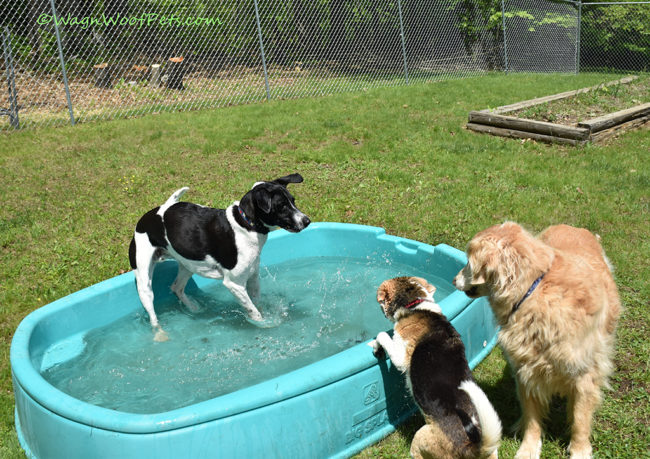 Flashback Friday - When Will the Pool Open?